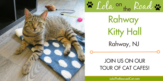 Lola on the Road: Rahway Kitty Hall (Rahway, NJ)