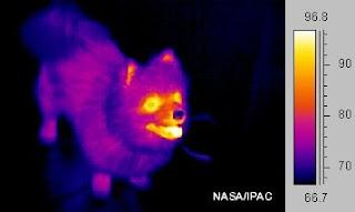temperatura dos cães