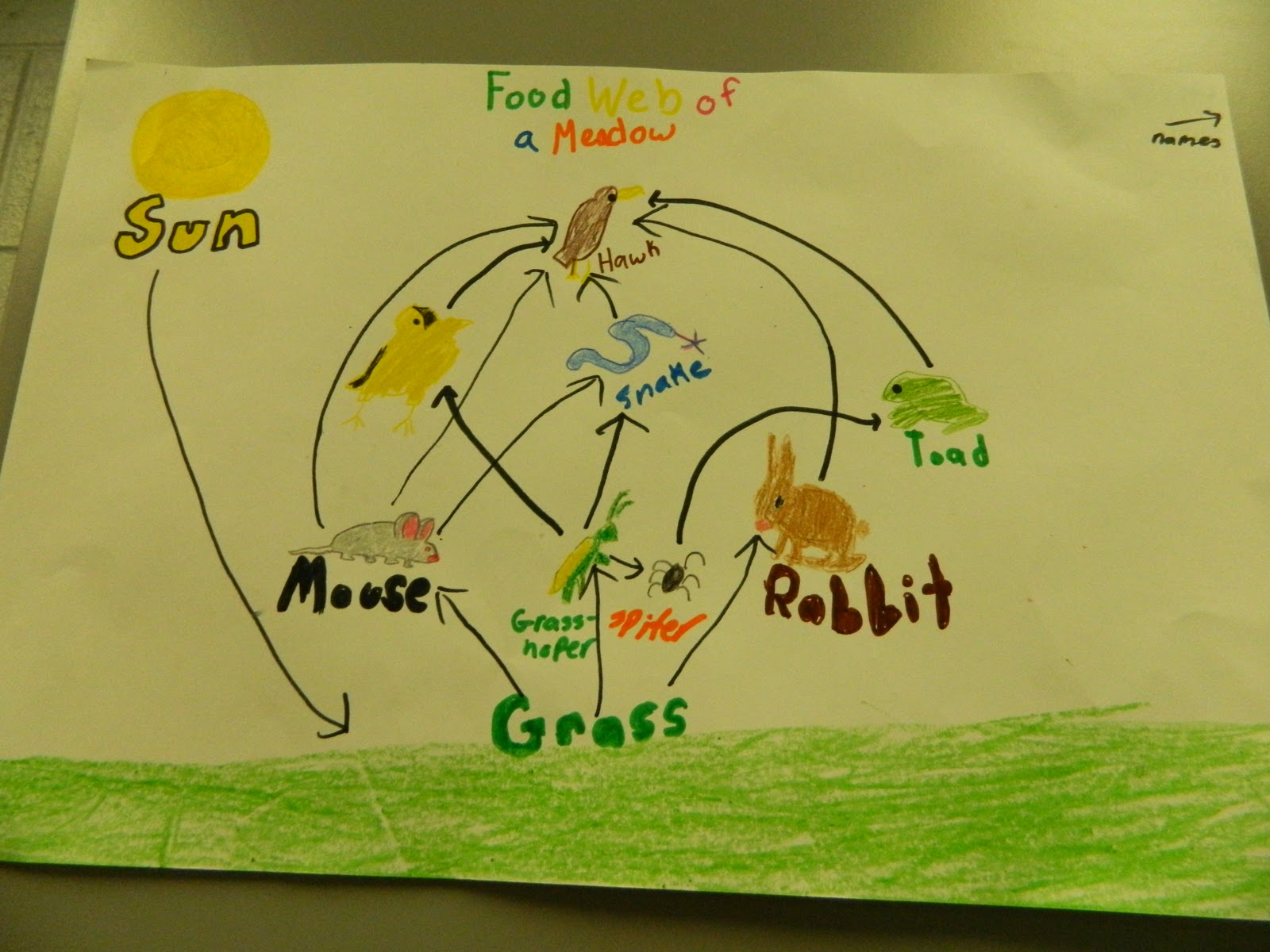 Science Gal Food Webs Posters