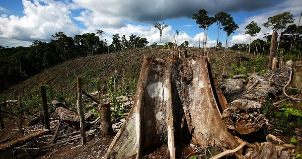 deforestation essay spm Globalization and global warming (ipcc spm): • a rise of (wikipedia deforestation) conclusion global warming affects everyone.