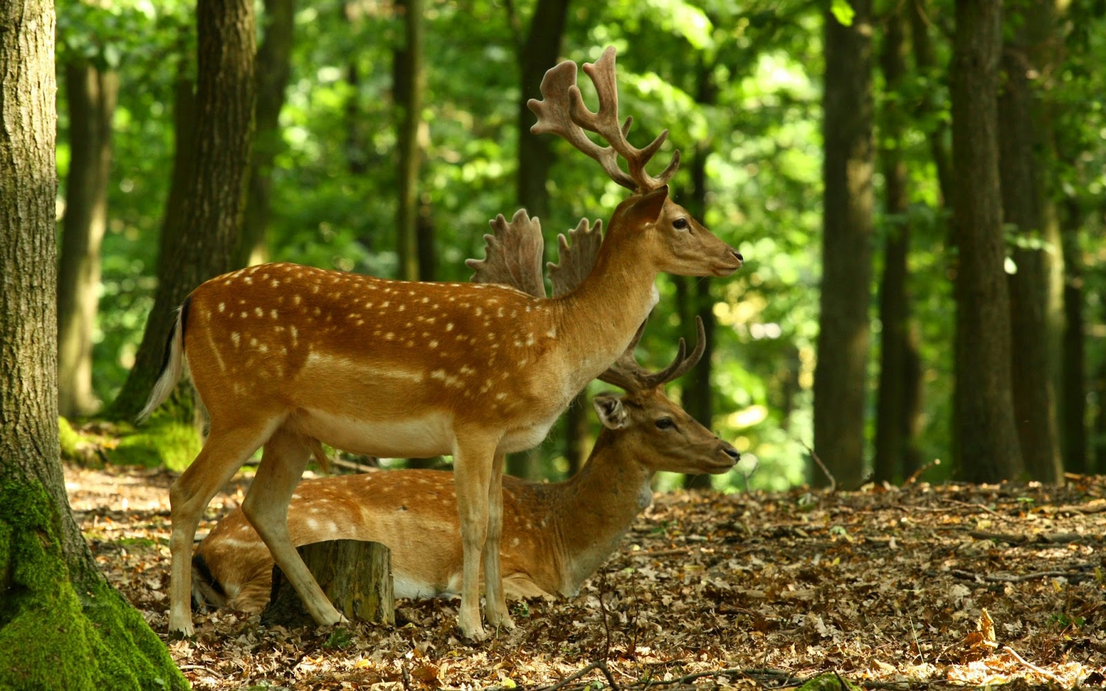 Beautiful Forest with Deer