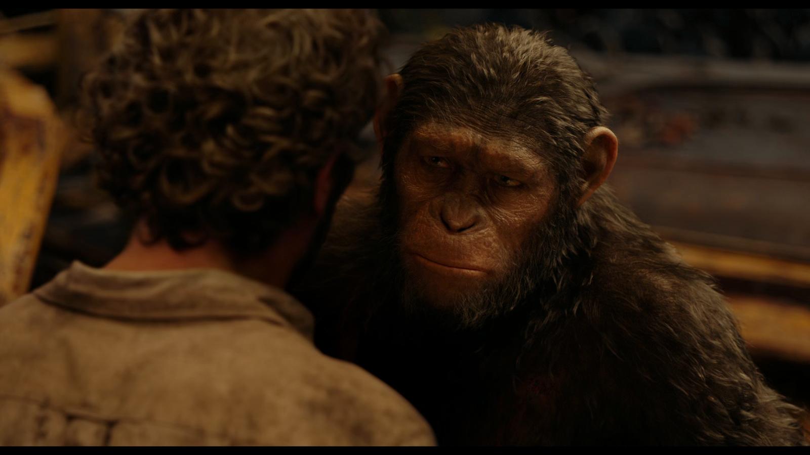 Captura de El planeta de los simios: Confrontación (2014) 1080p x265 HEVC Latino – Inglés