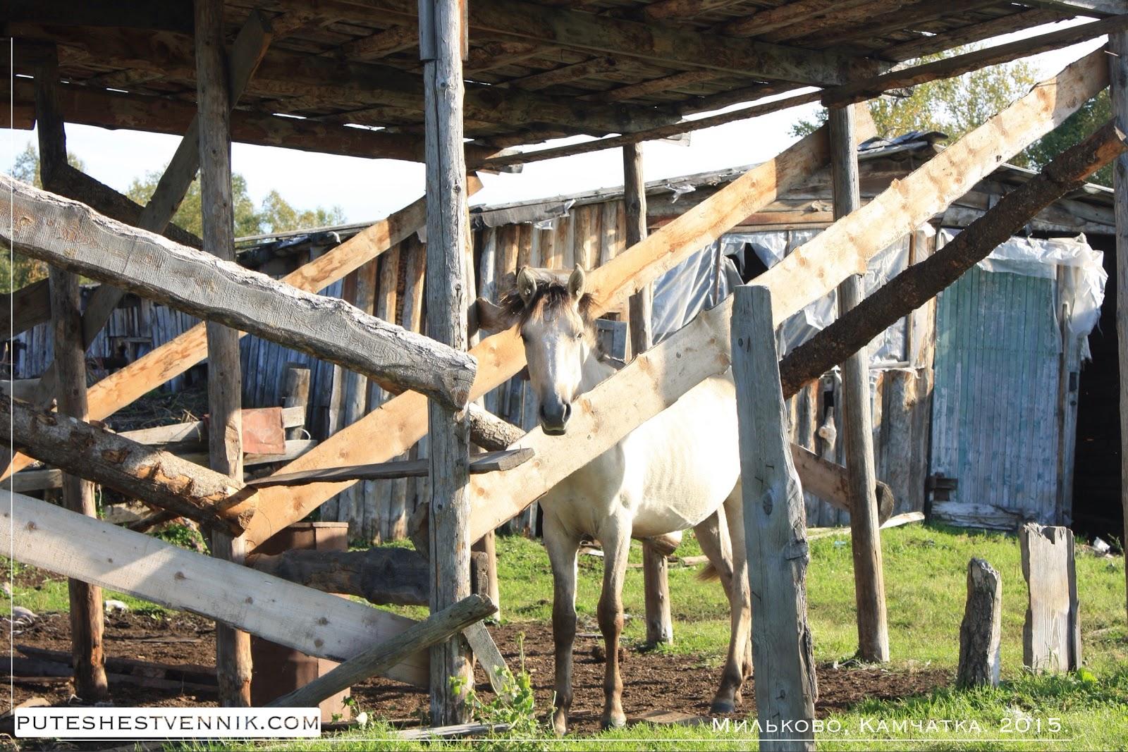 Лошадь под деревянным навесом