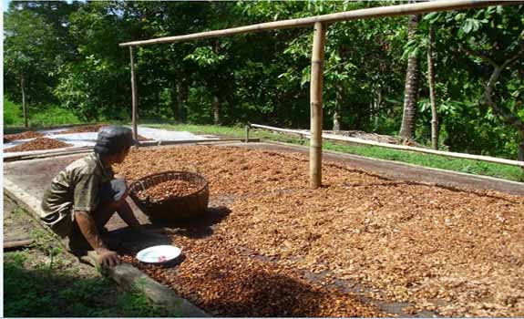 Manfaat Sistem Agroforestri pada Petani