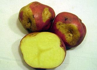 Peruanita potato, Potatoes Peru, 3.000 varieties of potatoe, Peru and the potatoe native