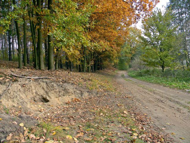 nora, droga, las, jesień