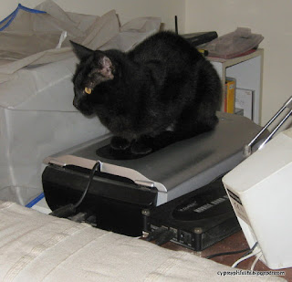 The cat Jemima using the scanner as a bed, or at least a place to sit