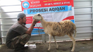 syarat wajib kambing aqiqah