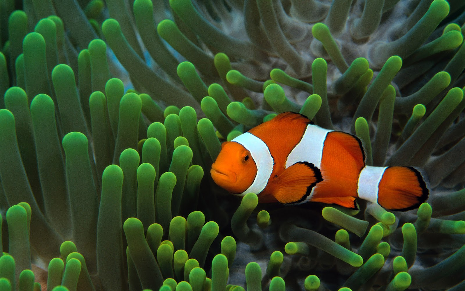 Fish Pictures Ocean Wallpapers Chapter 1