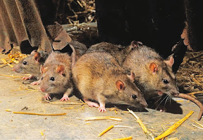News: Kogi Lassa fever patient dies, diarrhoea kills three in Kebbi