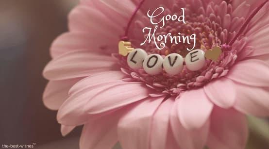 amazing good morning photo with pink rose