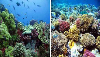 Taman Laut Pulau Abang