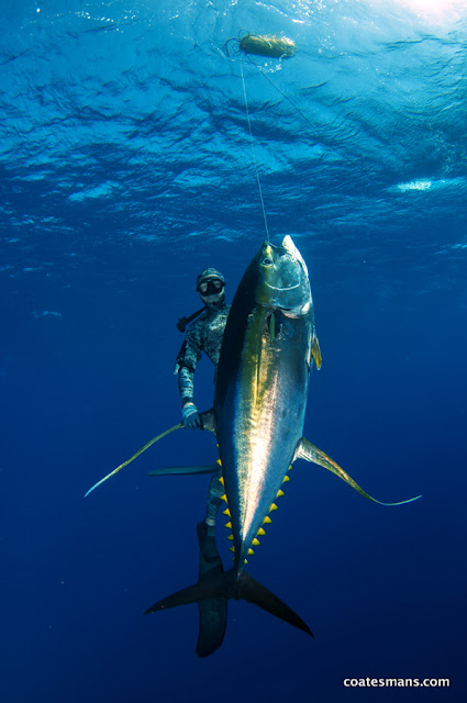 Spearfishing Ascension Island Yellowfin Tuna