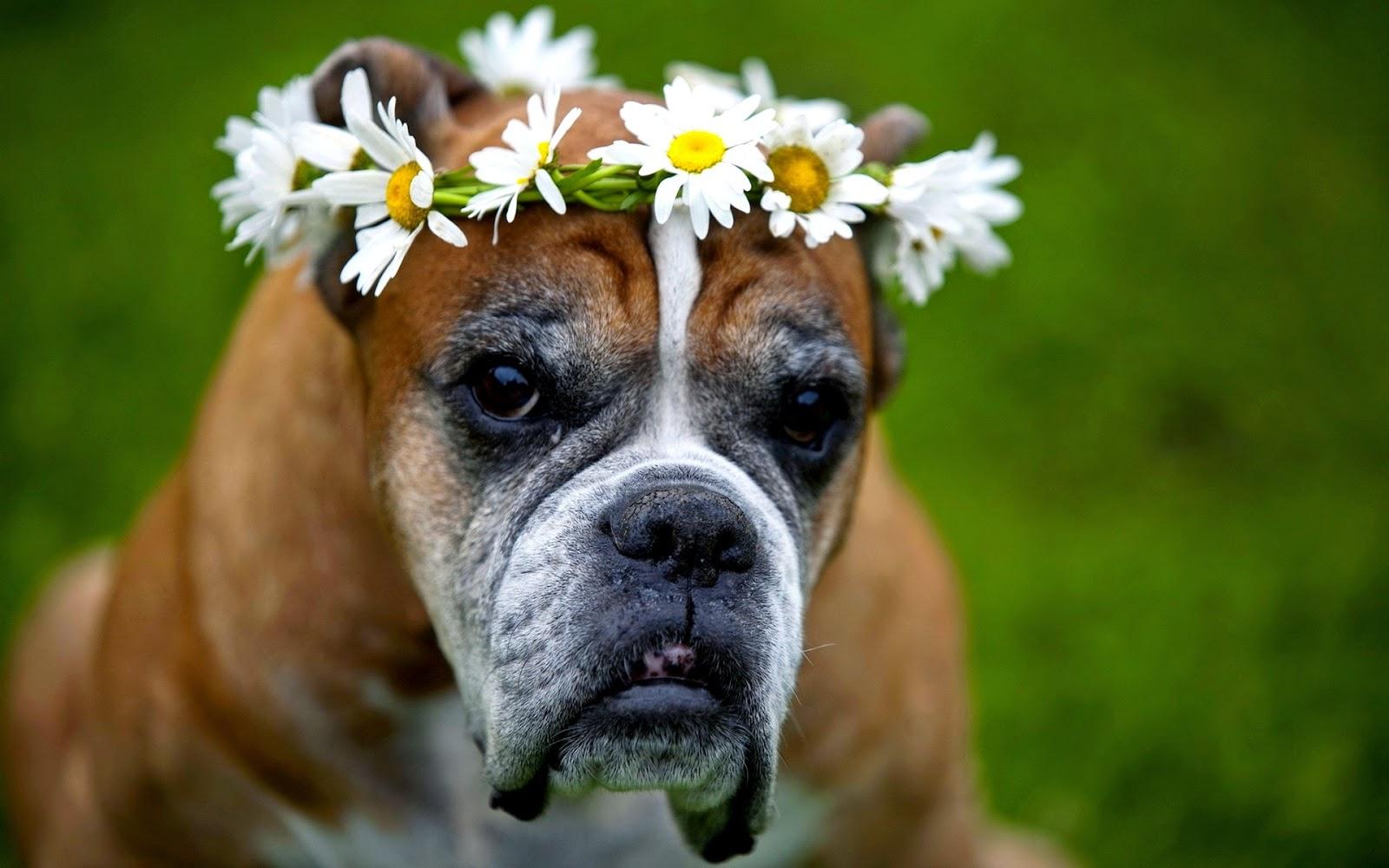 wallpaper met hond met bloemen