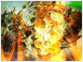 Marajuana - The Devils Advocant - A Fearful Awareness