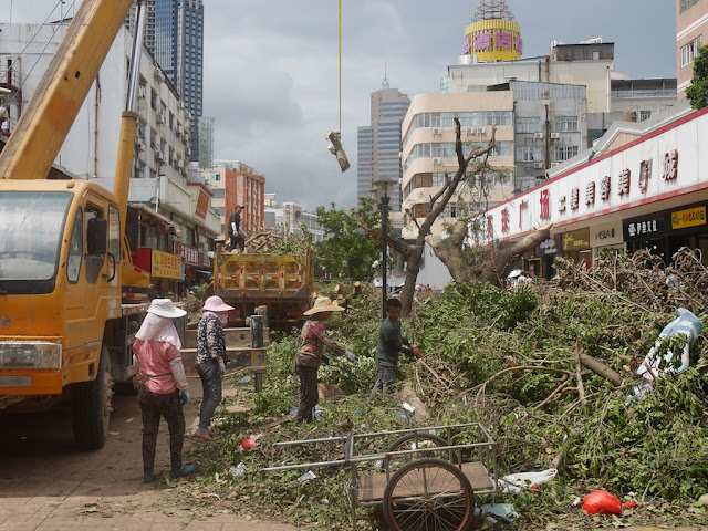 removing debris from trees after Typhoon Hato