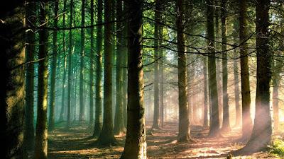 world best forest  hd wallpaper download7