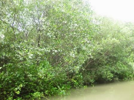 PUSAT STUDI SUMBER DAYA PESISIR LAUT: Hutan Mangrove Gunung Anyar Surabaya.... Siapkah menjadi ...