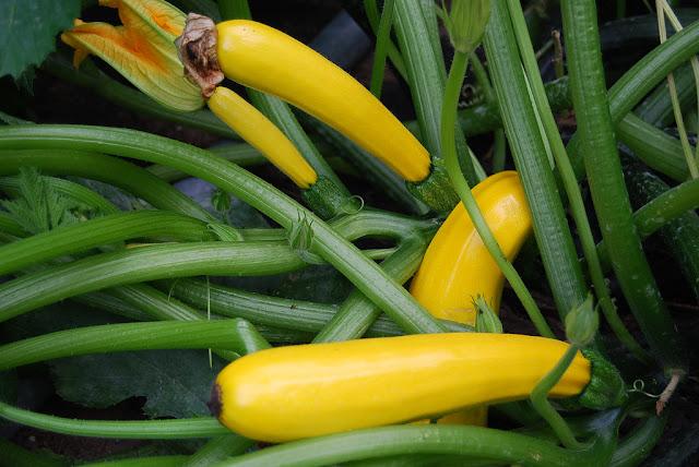 Pengertian benih dan bibit tanaman