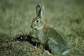 burgess animal book - Peter Rabbit