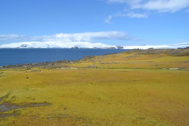 Antarctic has seen widespread change in last 50 years, moss study reveals