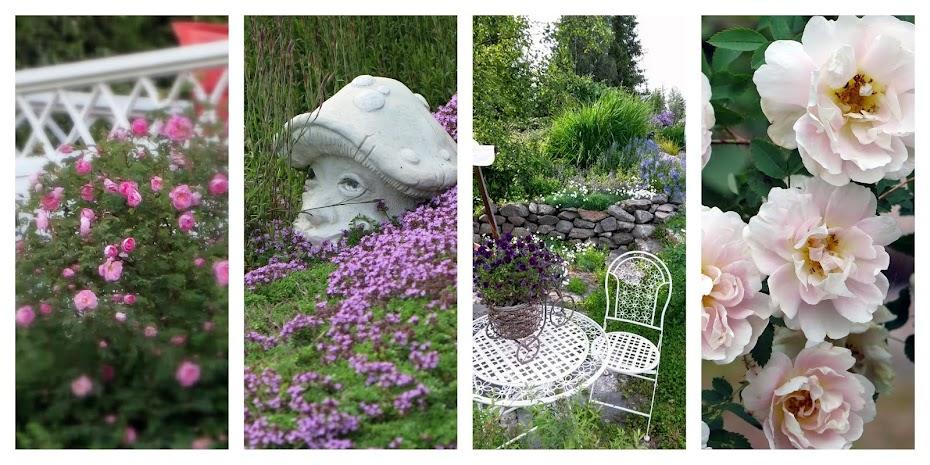 Salainen puutarha