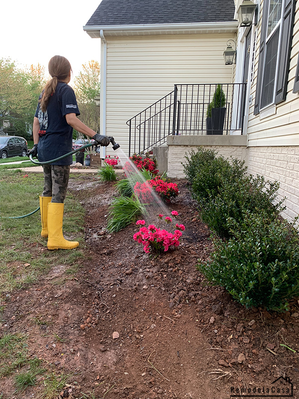 Cristina Garay hose watering the newly planted bushes in the front yard