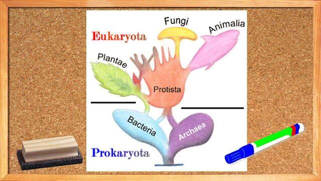 ☞ Los 6 Reinos de la Naturaleza y su Evolución  en la Historia✎