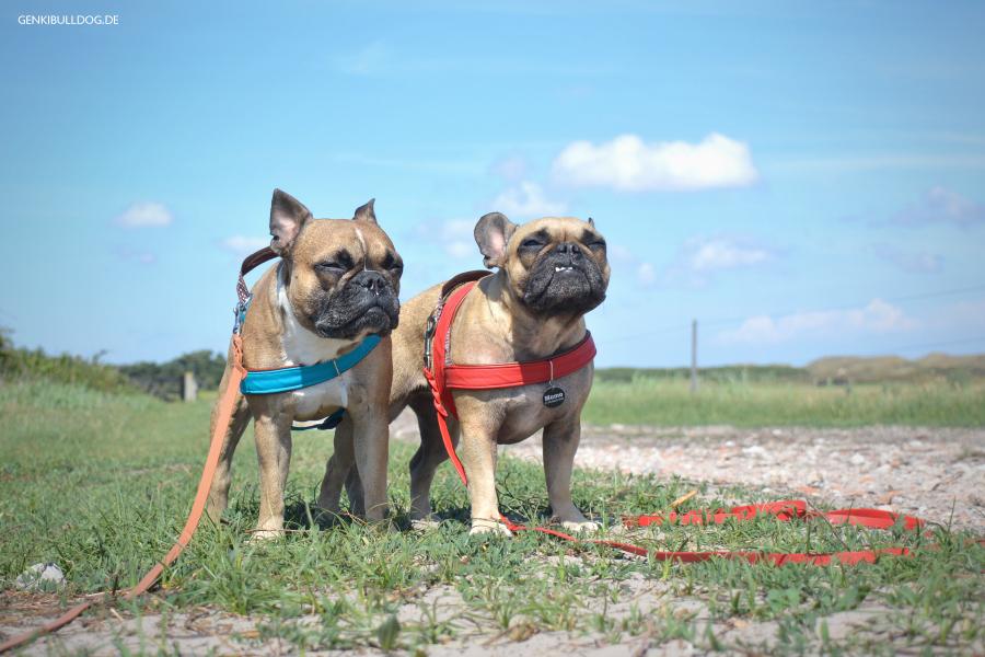 Urlaub mit Hund - Texel De Muy