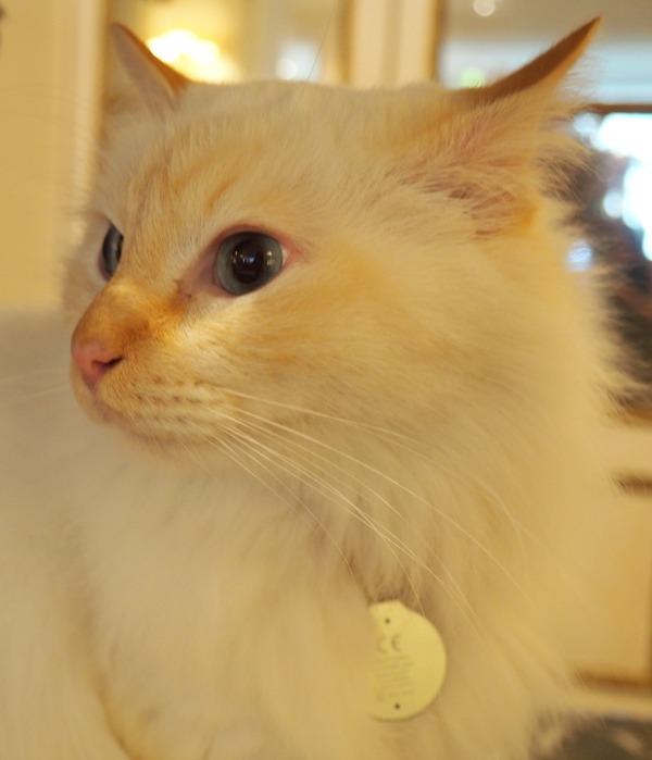 le bristol feline