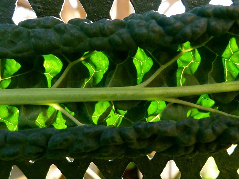 Mailhos Cuisine De Jardin Cavola Nero
