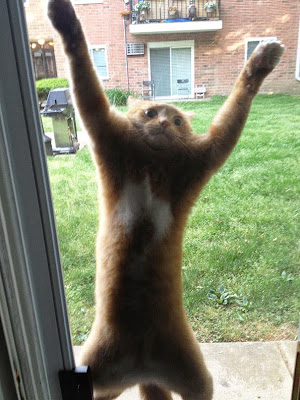 foto de gato queriendo entrara a casa