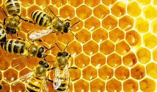 5,4 εκατ.ευρώ Ενισχύσεων σε μελισσοκομικές δράσεις