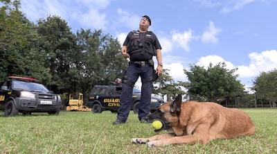 Cão treinado pela Guarda Civil de Rio Claro ganha aposentadoria e terá novo lar