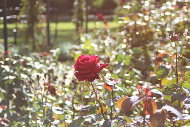 גן הורדים