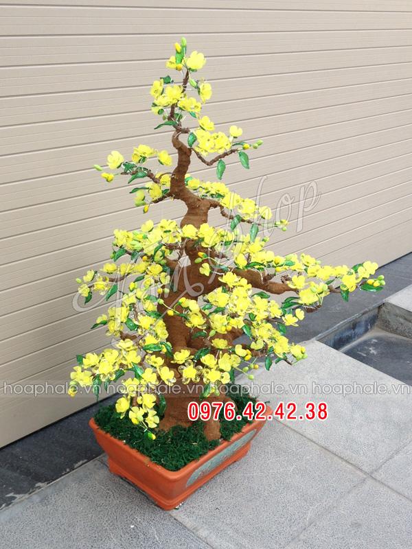 Goc bonsai mai dao tai Cam Hoi