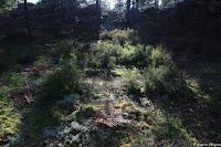Clair-obscur forestier dans les Trois Pignons