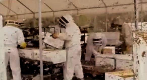 malone 03 allier bourbonnais apiculture industrielle le massacre. Black Bedroom Furniture Sets. Home Design Ideas