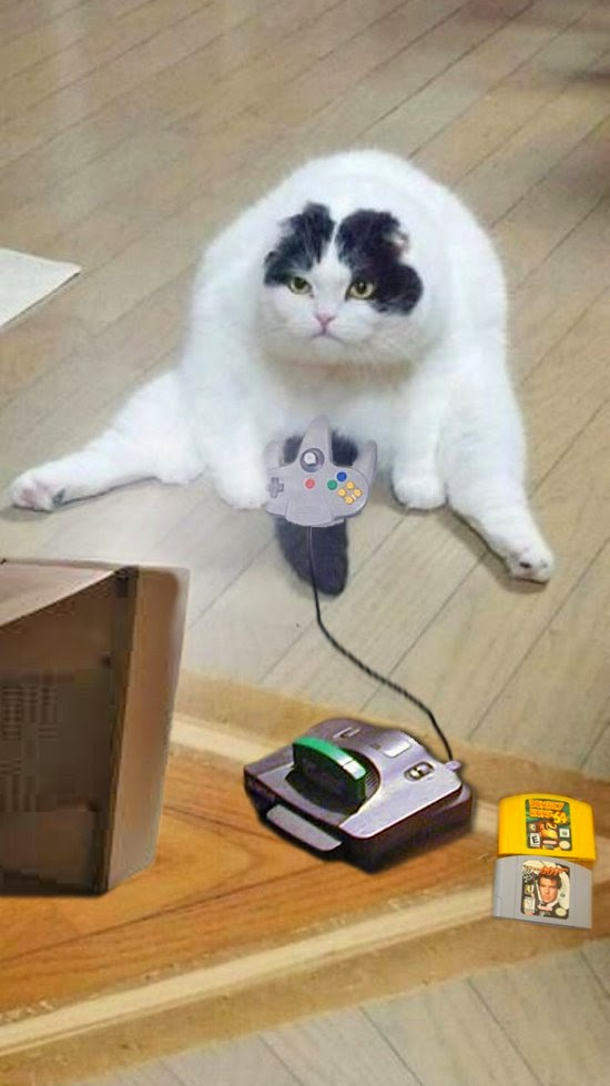Most Random Cat Picture On The Internet