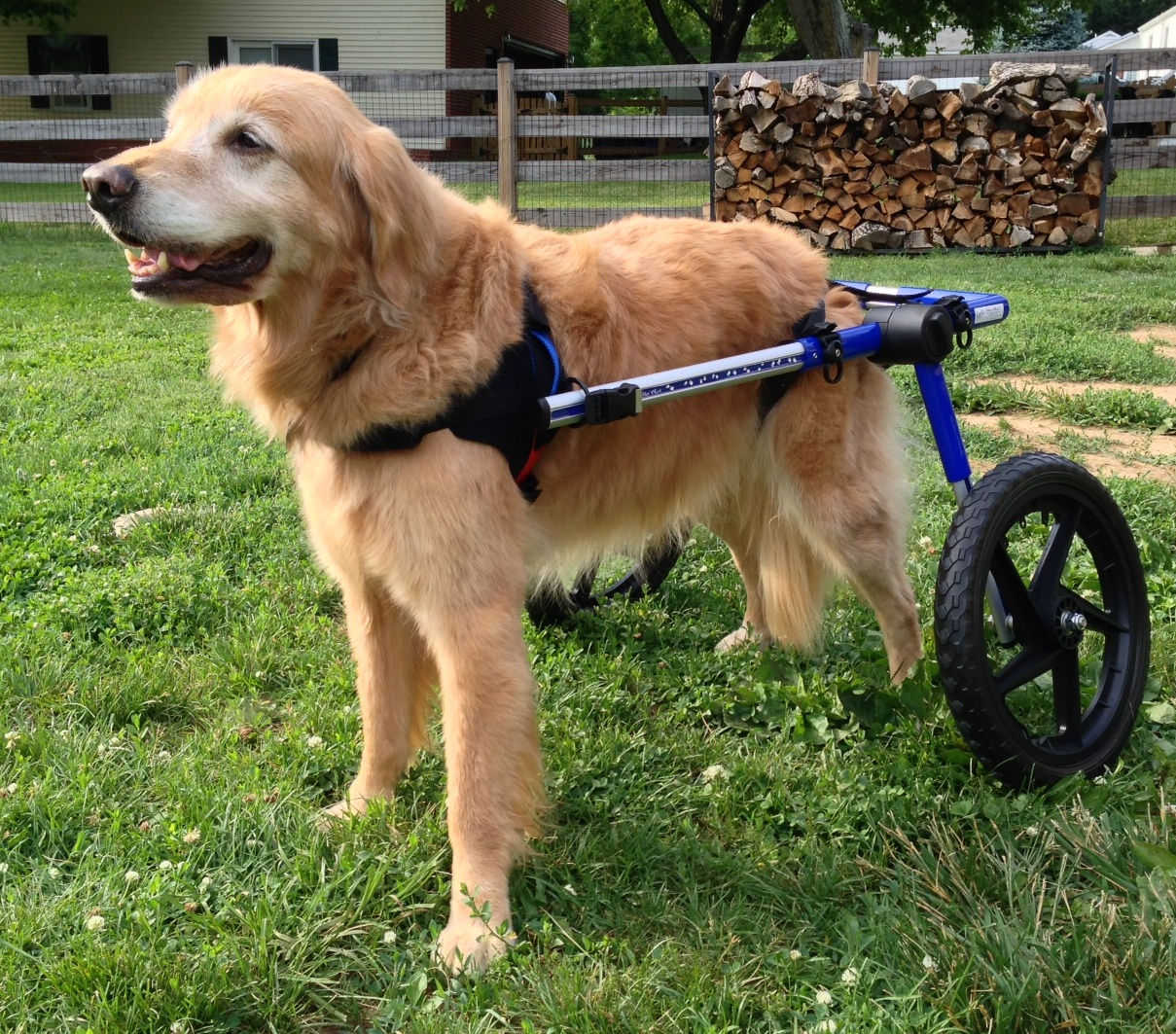 Chairs For Dogs Monogrammed Beach Sale Handicapped Pets A Dog Wheelchair From Rainbow Bridge