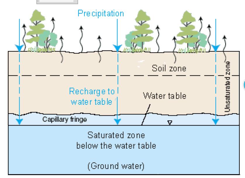 Pengaruh Air Terhadap Pertumbuhan Tumbuhan