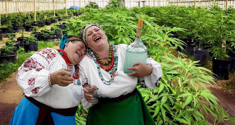 Украинки с самогоном на фоне плантаций марихуаны | STARTUP NEWS