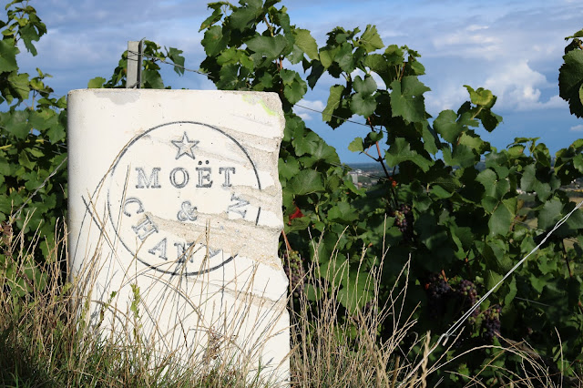 Moët and Chandon vineyards in France