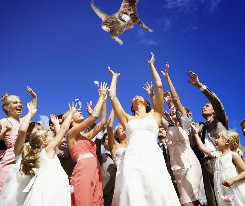 Düğünlerde evlenen çiftler için, gelin damat eğlenceli fotoğraf çekimlerine örnek olarak buket yerine kedi fırlatma efekti
