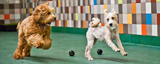 Search for the Best Los Angeles Dog Daycare