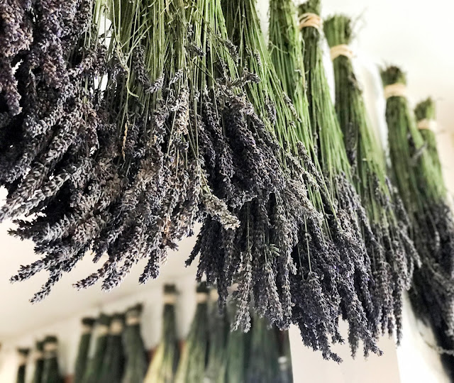Drying lavender from our certified organic fields on San Juan Island, WA