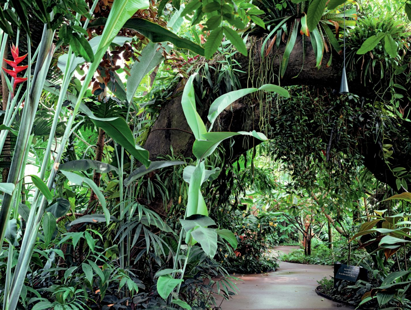 Tropical Rainforest Plants And Their Names