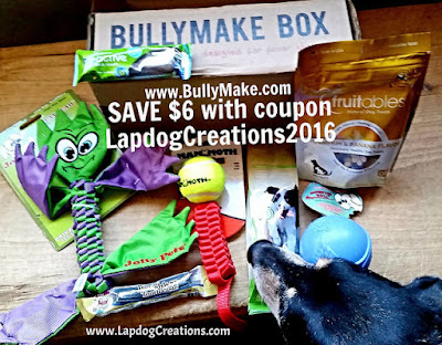 Teutul sniffing out the toys and treats inside his Bullymake Box  #Bullymake  Save $6 off any plan with coupon code LapdogCreations2016 #LapdogCreations