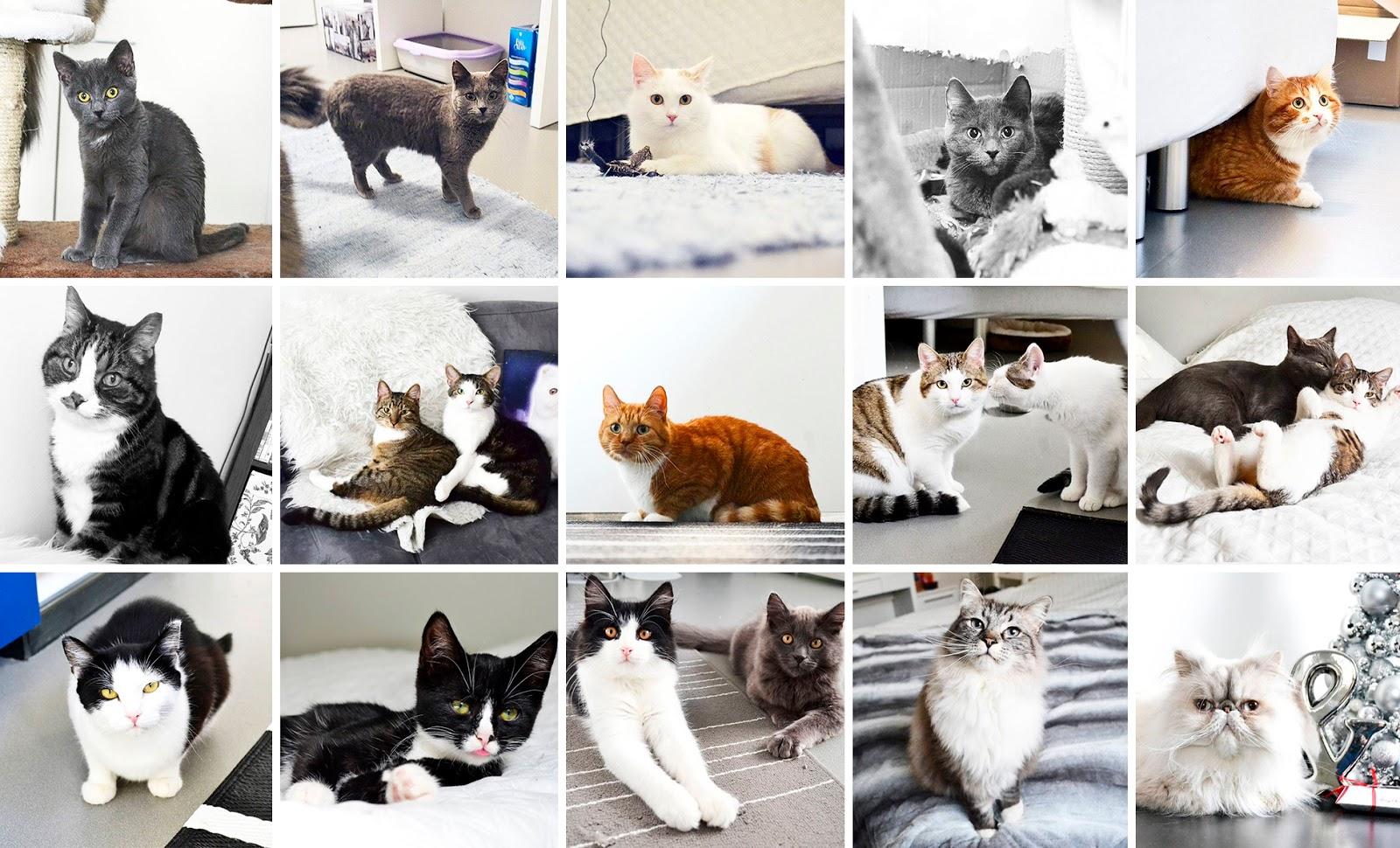 kissojen päivä