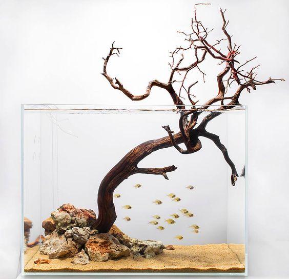 Bể thủy sinh không trồng cây - đơn giản mà ấn tượng